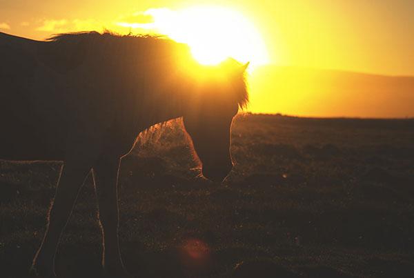"""Wander Often"" | Iceland"